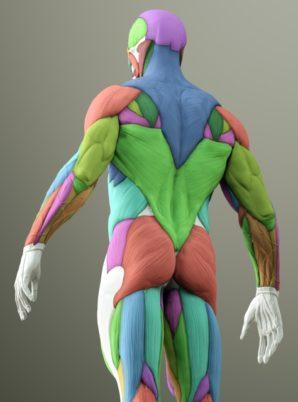 力強く動ける身体の特徴
